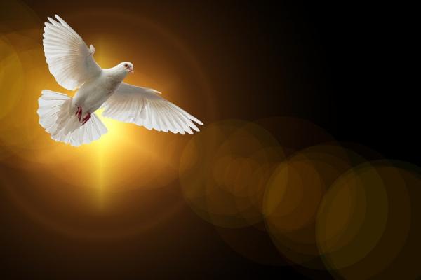 Holy Spirit as Dove descending, MWN, website ann